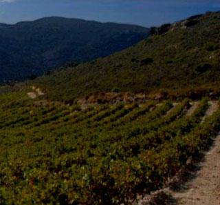 AOC Côtes Du Roussillon Villages Lesquerde