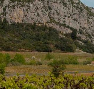 AOC Côtes Du Roussillon Villages Tautavel