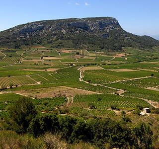 AOP Côtes du Roussillon Villages