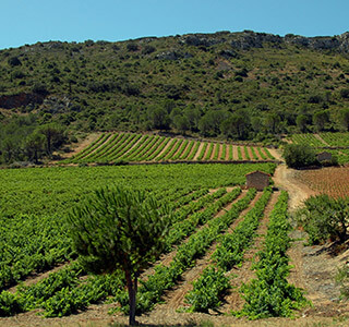 AOP Côtes du Roussillon Villages Latour de France