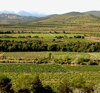AOP Côtes du Roussillon Villages les Aspres