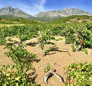 AOP Côtes du Roussillon Villages Lesquerde